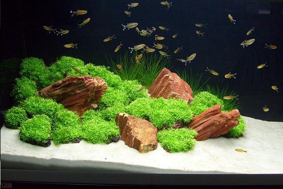 Jak Wybrać Odpowiednie Oświetlenie Do Akwarium