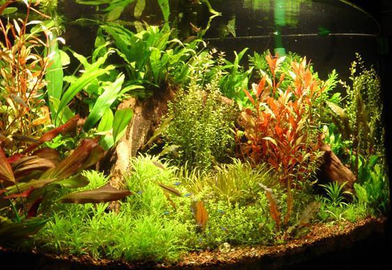 Super Akwarium - Harmonijnie rozmieszczamy rosliny w akwarium