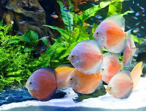 Akwarium Wielogatunkowe Towarzyskie