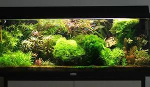 Ziemia Ogrodowa Do Akwarium