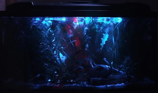 Tolan Nocne Oświetlenie Akwarium 112 Litrów 2