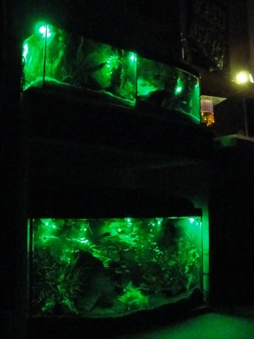 Moje Akwaria Oświetlenie Nocne