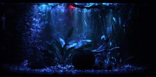 Tolan Akwarium Słodkowodne Wielogatunkowe Zmieniony Wyglad