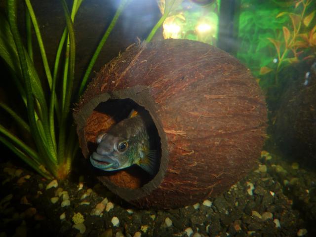Jak Urządzić ładne I Przyjazne Rybom Akwarium Zapytajonetpl