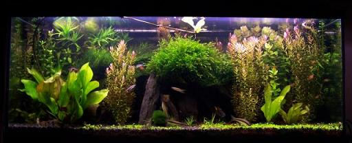 Oświetlenie W Akwarium Roślinnym